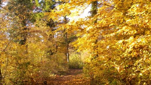 Herbst-K